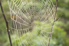 Morning dew on a spider web. The spider web close up in bright droplets of dew Stock Image