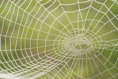 Morning dew on a spider web. The spider web close up in bright droplets of dew Royalty Free Stock Image
