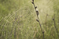 Morning dew on a spider web. The spider web close up in bright droplets of dew Stock Photo