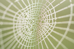 Morning dew on a spider web. The spider web close up in bright droplets of dew Royalty Free Stock Images