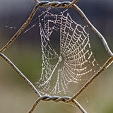 Morning dew on spider web Stock Images