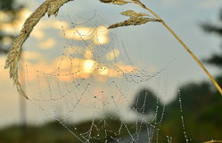 Morning dew on a spider web Stock Photos