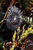 Morning dew on spider web. This photo was taken at Mead Wildlife Marsh in central Wisconsin.  There was a light dew that morning and the fields were decorated Royalty Free Stock Photos