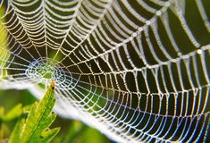 Morning dew on a spider web. Royalty Free Stock Photos