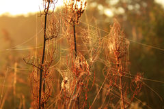 Morning dew on spider webs Stock Images