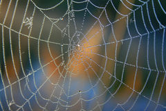 Morning dew on spider webs. In forest Royalty Free Stock Photos