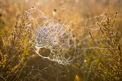 Morning dew in spiderweb Stock Photography