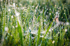Morning dew on spiderweb Stock Photography