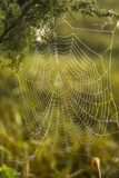 Morning dew on a spiderweb Royalty Free Stock Photography
