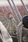 Morning dew on Spiderweb sailboat detail Royalty Free Stock Photo