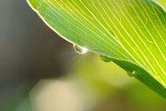 A morning dew and sunrays Royalty Free Stock Image