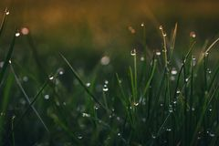 Morning dew in the sunrise Stock Image