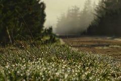 Morning dew at sunrise sunrise royalty free stock image