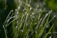 Morning Dew of Tashiro Wetland Royalty Free Stock Images