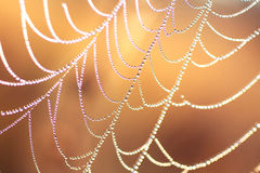 Morning dew on a web Stock Photography
