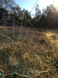Morning dew on web Stock Image