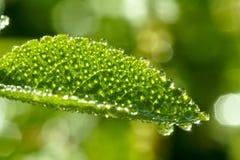 Morning dewdrop royalty free stock image