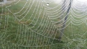 Morning Dewdrops. Early morning dewdrops showing the design and pattern of a spider web Stock Photo