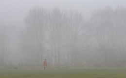 Morning Dog Walker in the Mist Stock Image