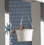 Morning dove Stock Photos