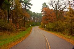 Morning Drive 2187 royalty free stock photography