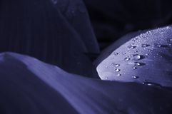 Morning drops royalty free stock photography