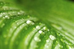 Morning drops on green leaves Stock Photo