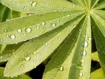 Morning drops of water on a leaves Stock Photography