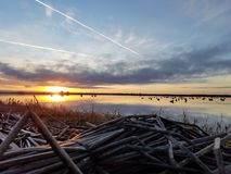 Morning in the duck blind stock photo