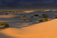 Morning dunes Stock Image
