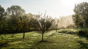 Morning dust Royalty Free Stock Image