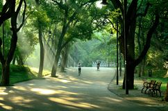 The morning of East Lake - road. In the early morning, it was taken in the East Lake scenic area. The East Lake scenic area is located in Wuhan, China Royalty Free Stock Photography