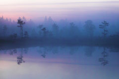 Morning in Estonian bog Stock Images