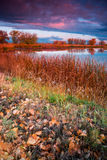 Morning Fall Color Royalty Free Stock Image