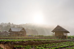 Morning on the farm. Morning on a farm in the holidays Royalty Free Stock Photography
