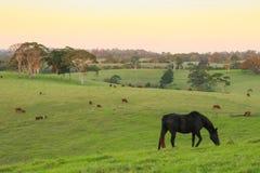 Morning Farm Scene Royalty Free Stock Image