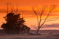 Morning Farm Trees Royalty Free Stock Images