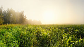 Morning field Stock Images