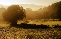 Morning Royalty Free Stock Images