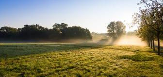 The morning field. Stock Photos