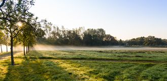 The morning field. Stock Photography