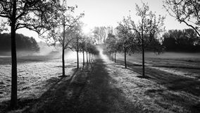 The morning field. Royalty Free Stock Photo