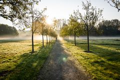 The morning field. Stock Images