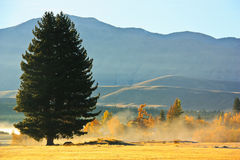 Morning on the field with tree,sun ,mountain and fog Stock Photography