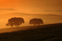 Morning in the fields, Pienza in background, Tuscany, Italy Royalty Free Stock Images