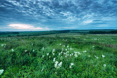 Morning in fiels in Russia Royalty Free Stock Image