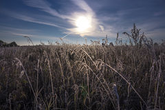Morning, the first autumn frosts Stock Images