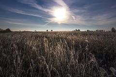 Morning, the first autumn frosts Stock Photography