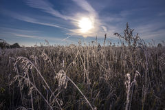 Morning, the first autumn frosts Royalty Free Stock Photography