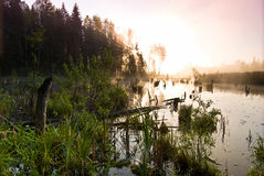 Morning fishing in the swamp. Morning fishing at the dawn Royalty Free Stock Photography